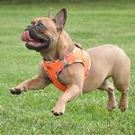 View Image 2 of American River Hawaiian Trim Choke-Free Dog Harness by Doggie Design - Sunset Orange