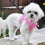 View Image 3 of American River Choke-Free Dog Harness by Doggie Design - Pink Polka Dot