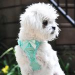 View Image 3 of American River Choke-Free Dog Harness by Doggie Design - Teal Polka Dot