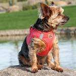 View Image 1 of American River Ultra Choke-Free Mesh Dog Harness by Doggie Design - Coral