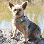View Image 1 of American River Ultra Choke-Free Mesh Dog Harness by Doggie Design - Fossil Brown