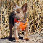 View Image 1 of American River Ultra Choke-Free Mesh Dog Harness by Doggie Design - Hunter Orange