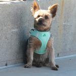 View Image 1 of American River Ultra Choke-Free Mesh Dog Harness by Doggie Design - Teal