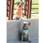 View Image 2 of American River Ultra Choke-Free Mesh Dog Harness by Doggie Design - Teal