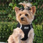 View Image 1 of American River Ultra Choke-Free Mesh Dog Harness by Doggie Design - Black