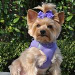 View Image 1 of American River Ultra Choke-Free Mesh Dog Harness by Doggie Design - Purple
