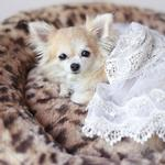 View Image 2 of Amour Dog Bed by Hello Doggie - King Leopard