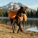 View Image 2 of Approach Dog Pack by RuffWear - Orange Poppy
