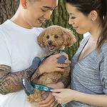 View Image 2 of Argyle PAWKS Dog Socks - Slate
