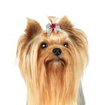 View Image 4 of Aria Grosgrain Rosette Dog Bows