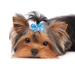 View Image 2 of Aria Mia Dog Bows