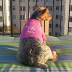 View Image 3 of Vail Dog Sweater by Beverly Hills Dog - Pink