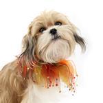 View Image 1 of Autumn Rhinestone Dog Neck Scrunchy
