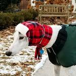 View Image 2 of My Canine Kids Aviator Hat and Scarf Set for Dogs - Red Plaid