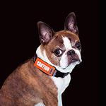 View Image 2 of Bark Notes Dog Collar and Leash Attachments - Caution