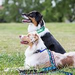 View Image 3 of Bark Notes Dog Collar and Leash Attachments - Friendly