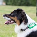 View Image 2 of Bark Notes Dog Collar and Leash Attachments - Friendly