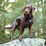 View Image 2 of Baxter Dog Backpack by Kurgo - Black and Orange