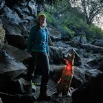 View Image 1 of The Beacon Dog Safety Light by RuffWear
