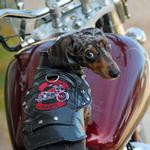 View Image 1 of Biker Dawg Motorcycle Dog Jacket by Doggie Design - Black