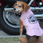 View Image 1 of Biker Dawg Motorcycle Dog Jacket by Doggie Design - Pink