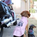 View Image 3 of Biker Dawg Motorcycle Dog Jacket by Doggie Design - Pink