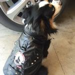 View Image 2 of Biker Vest Dog Harness by Doggles - Moon Howlers