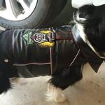 View Image 2 of Biker Vest Dog Harness by Doggles - Wild Dawgs