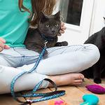 View Image 2 of Kitty RC Cat Leash - Bird Teal