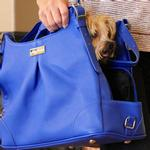 View Image 10 of Blue Lapis Mia Michele Dog Carry Bag