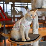 View Image 6 of Boo Turtleneck Cat Shirt by Catspia - Ivory