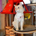 View Image 5 of Boo Turtleneck Cat Shirt by Catspia - Ivory