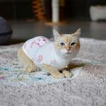 View Image 4 of Boo Turtleneck Cat Shirt by Catspia - Ivory