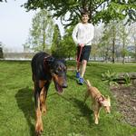 View Image 3 of Bungee Dog Coupler by Canine Equipment - Red/Grey