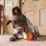 View Image 4 of Busy Buddy Sportsmen Bouncy Bone Chew Toy - Blaze Orange