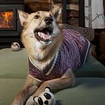 View Image 2 of Cabin Dog Sweater by RC Pet - Burgundy Melange