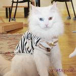 View Image 2 of Calico Cat Vest by Catspia - Off White
