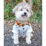 View Image 2 of Campus Dog Cardigan by Dog Threads