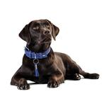 View Image 3 of Cannes Leather Dog Collar by HUNTER - Blue