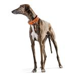 View Image 3 of Cannes Leather Dog Collar by HUNTER - Orange