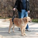 View Image 3 of PetSafe Solvit CareLift Dog Lifting Harness - Rear Only