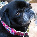 View Image 4 of Ziggy Dog Collar and Leash Set by Diva Dog