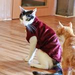 View Image 2 of Castor Cat Sweater by Catspia - Wine