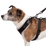 View Image 3 of Casual Canine BestFit Xtra Comfort Mesh Dog Harness - Black
