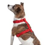 View Image 3 of Casual Canine BestFit Xtra Comfort Mesh Dog Harness - Red