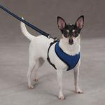 View Image 1 of Casual Canine Mesh Dog Harness - Blue