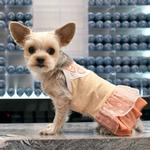 View Image 1 of Citrus Dog Dress by Dogo