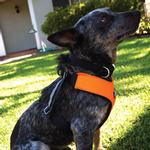 View Image 2 of Clickit Sport Dog Harness by Sleepypod - Orange Dream