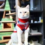 View Image 6 of Fonzie Turtleneck Cat Shirt by Catspia - Red