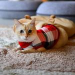 View Image 4 of Fonzie Turtleneck Cat Shirt by Catspia - Red